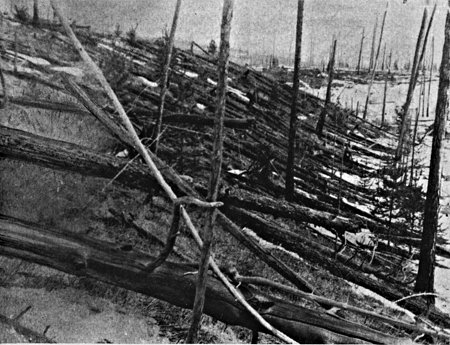 Trees felled by the explosion (Leonid Kulik Expedition)