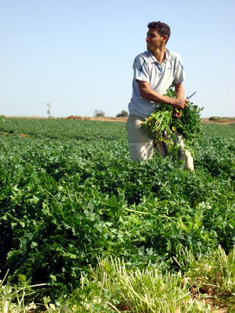 4-farmer-at-work